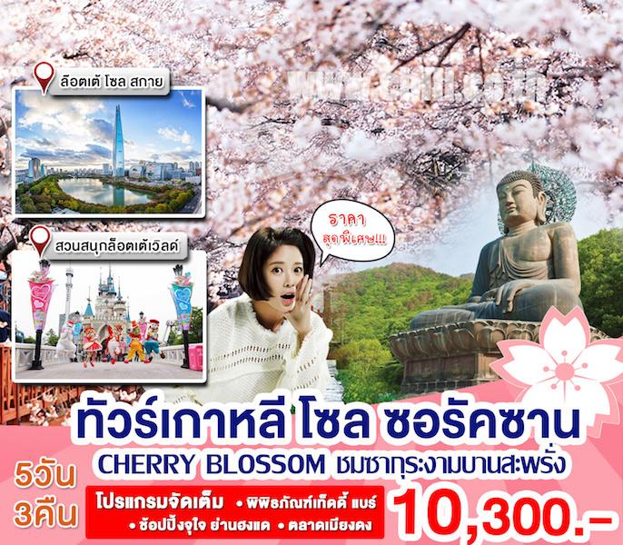 KP54 ทัวร์เกาหลี เที่ยวซอรัคซาน-โซล สุดคุ้ม!! สัมผัสฤดูใบไม้ผลิ ชมซากุระเกาหลี Cherry Blossom 5 วัน 3 คืน โดย Eastar Jet, Jeju Air