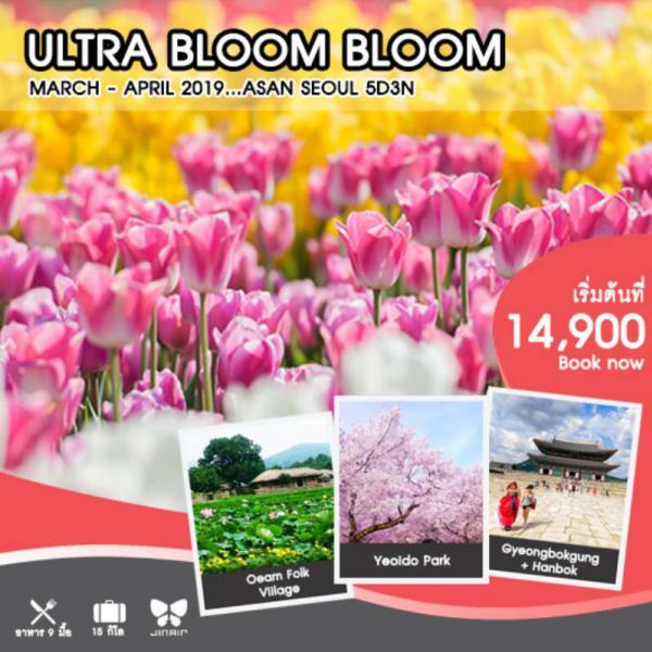 ทัวร์เกาหลี โซล ชมเทศกาลดอกทิวลิป เทศกาลดอกพ็อดกต สนุกสุดเหวี่ยงที่สวนสนุกเอเวอร์แลนด์ สวมชุดฮันบกเดินชมพระราชวังเคียงบงกุง 5 วัน 3 คืน โดยสายการบิน Jin Air