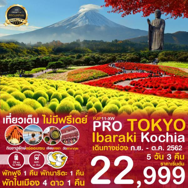 ทัวร์ญี่ปุ่น โตเกียว ฟูจิ อิบารากิ เที่ยวจัดเต็ม! ไม่มีอิสระฟรีเดย์ ขอพรวัดอาซากุสะ เที่ยวหมู่บ้านน้ำใส ชมทุ่งดอกโคเชียฤดูใบไม้เปลี่ยนสี 5 วัน 3 คืน โดยสายการบิน Nok Scoot (XW)
