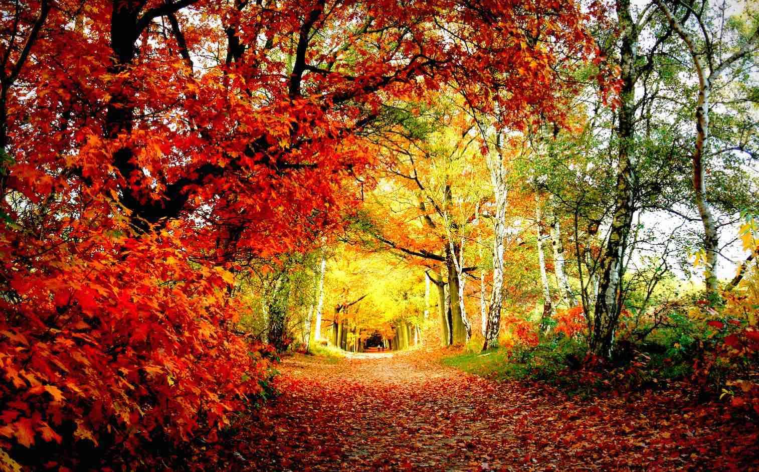 ฤดูใบไม้ร่วง ใบไม้เปลี่ยนสีของประเทศเกาหลี