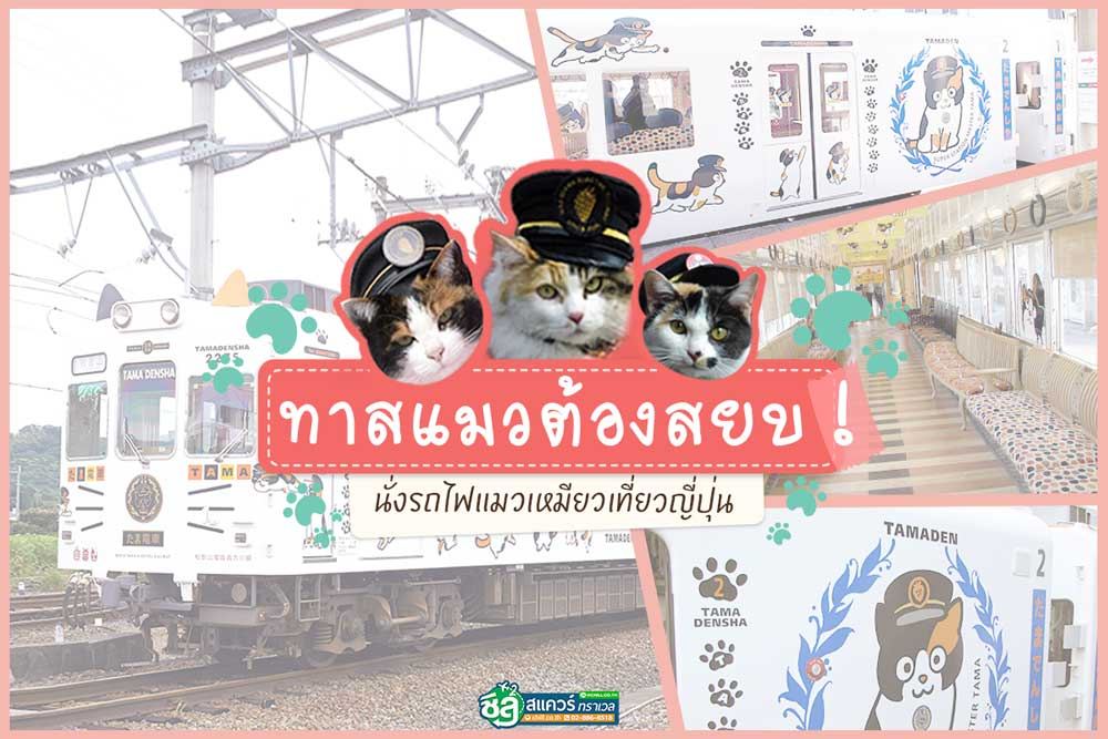 ทาสแมวต้องยอมสยบ ! นั่งรถไฟแมวเหมียวทัวร์ญี่ปุ่น