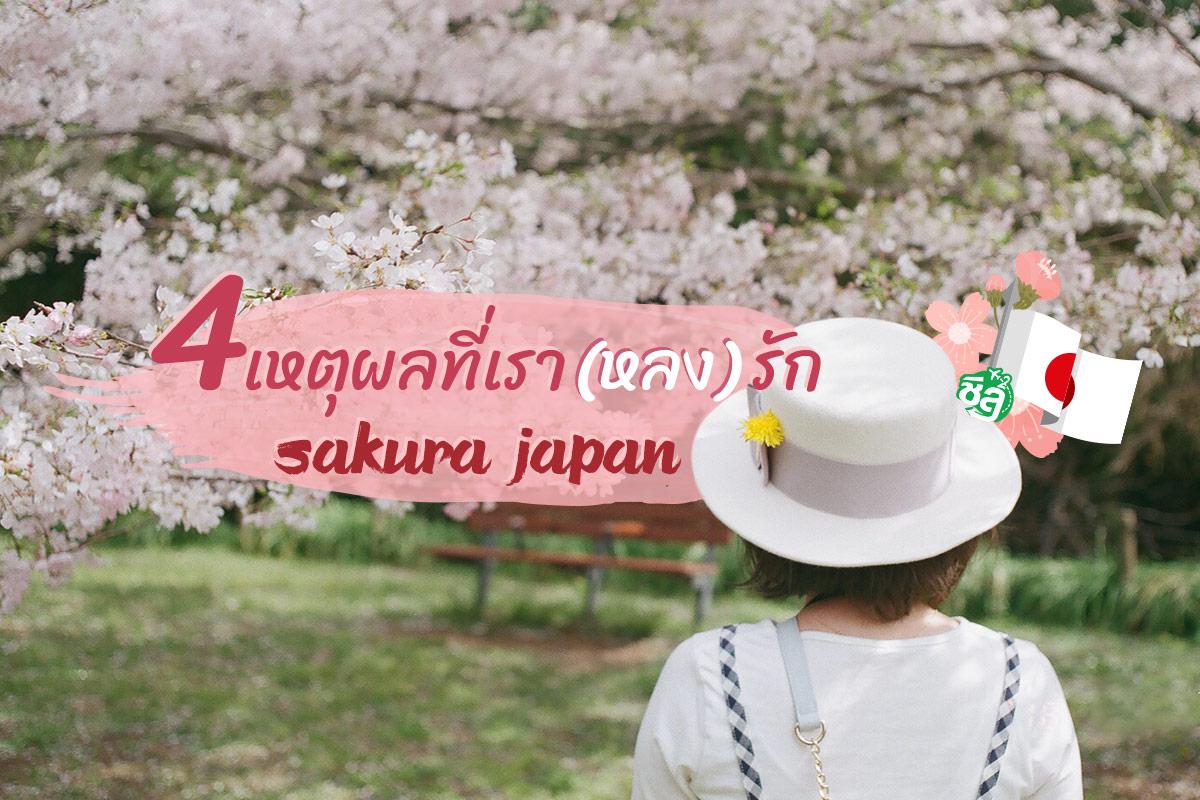 4 เหตุผลที่เรา (หลง) รัก ซากุระญี่ปุ่น