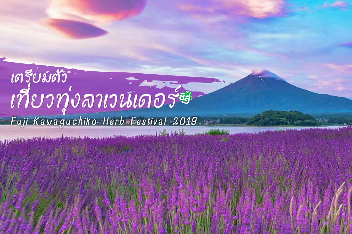 ตอบ 3 คำถามคาใจ ก่อนออกเที่ยวทุ่งลาเวนเดอร์ ญี่ปุ่น Fuji Kawaguchiko Herb Festival 2019