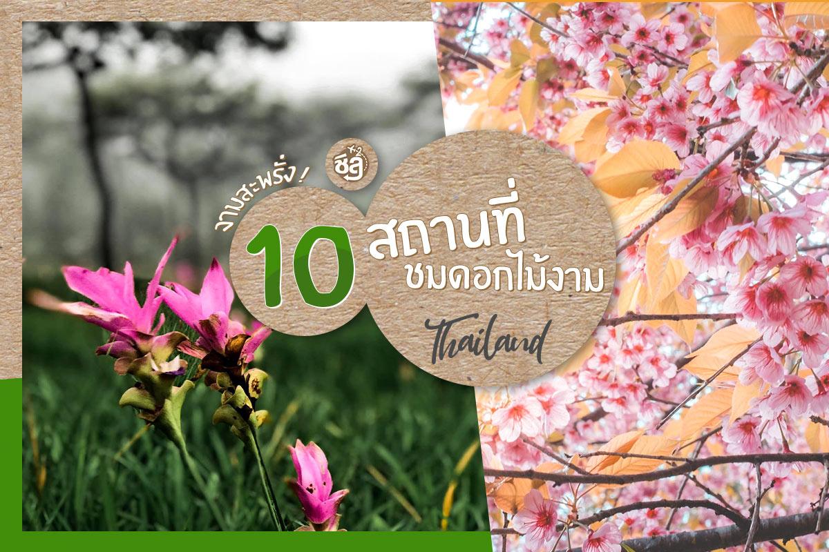 งามสะพรั่ง! แจกพิกัด 10 สถานที่ชมดอกไม้งามเมืองไทย ที่ใครๆ ก็หลงรัก