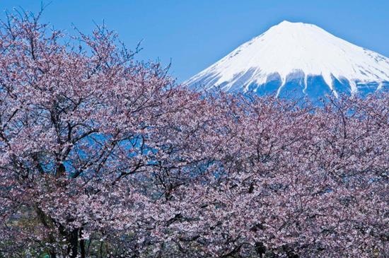 ฤดูกาลของประเทศญี่ปุ่น ช่วงฤดูใบไม้ผลิ