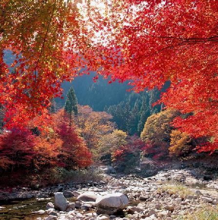 ฤดูร้อนของJapan