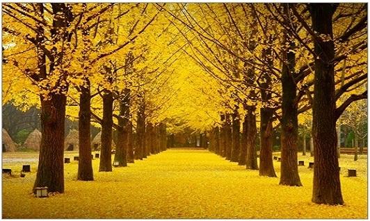 ฤดูใบไม้ร่วง