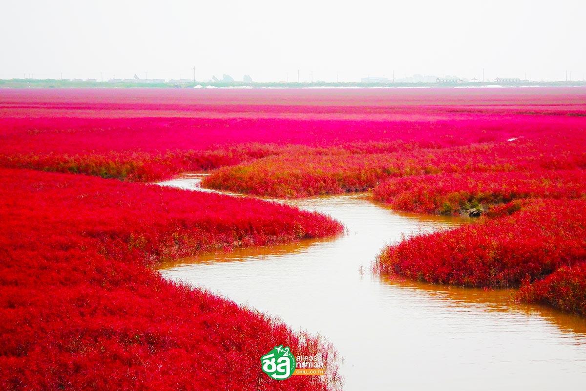 หาดหญ้าแดงผานจิ่น