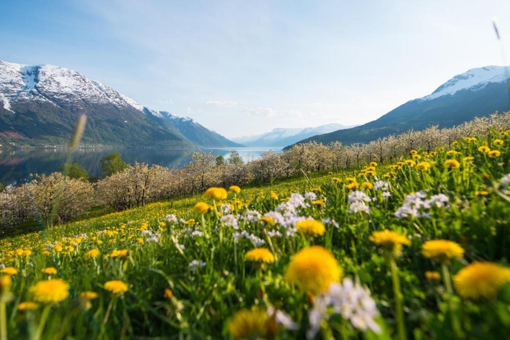 ฤดูใบไม้ผลิ (Spring)