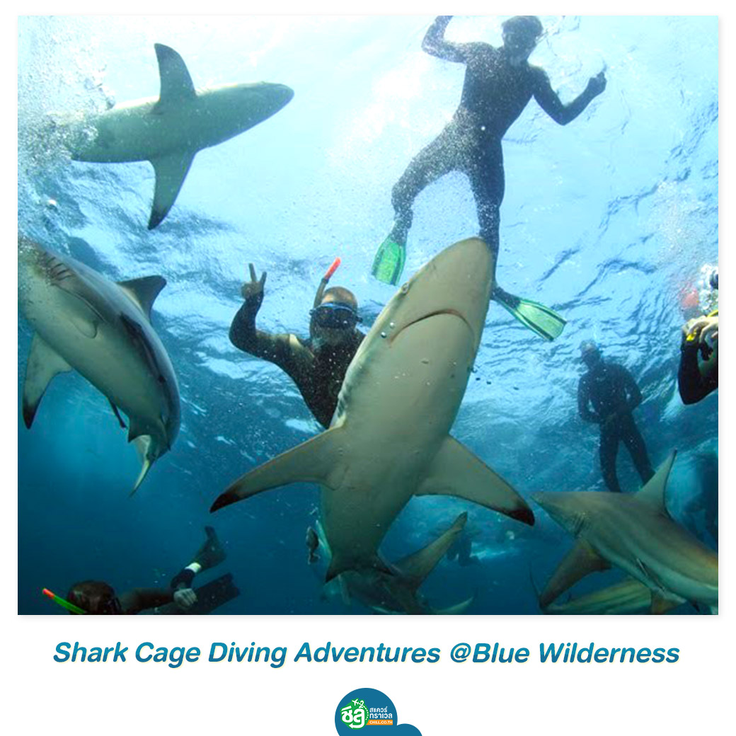 Shark Cage Diving Adventures @Blue Wilderness
