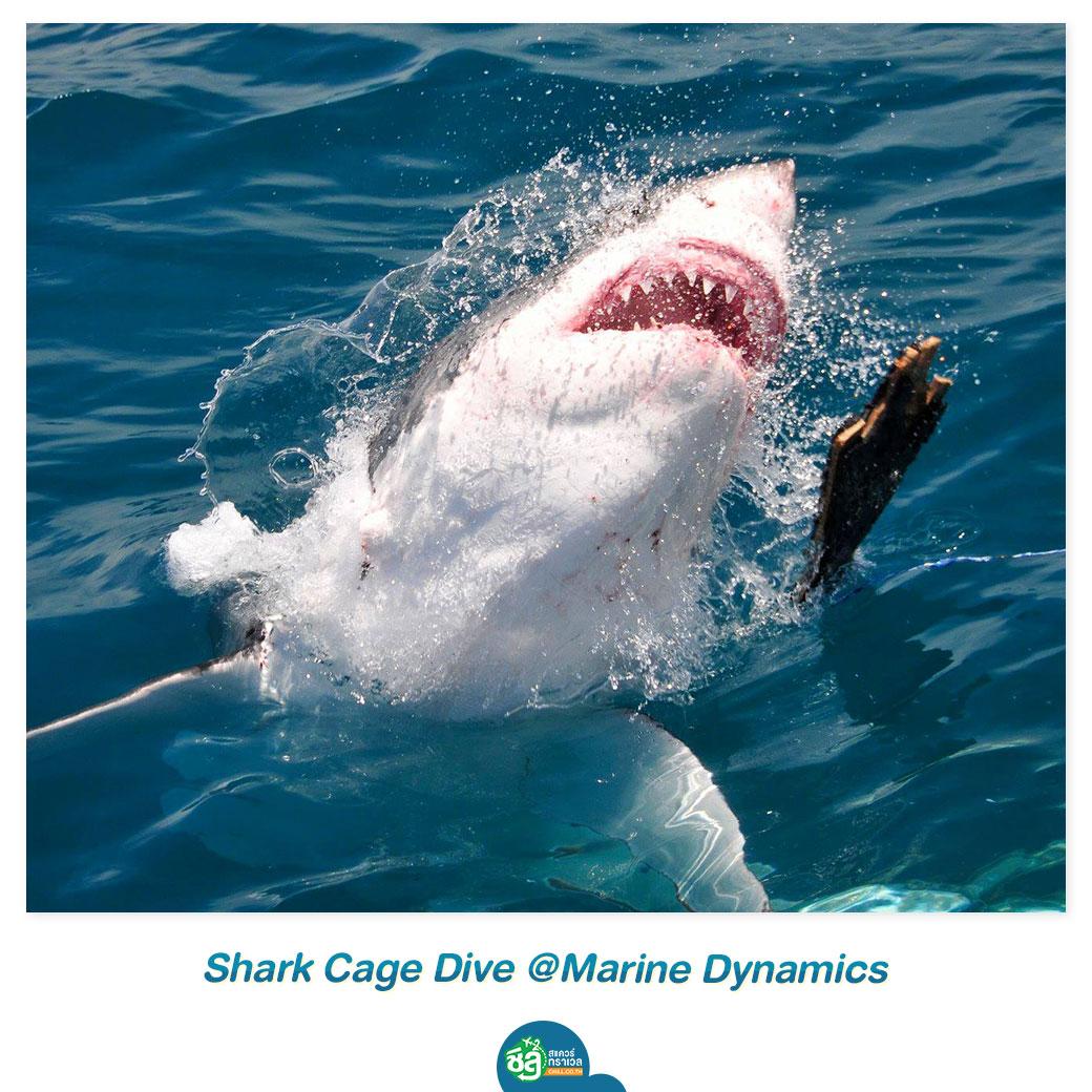 Shark Cage Dive @Marine Dynamics
