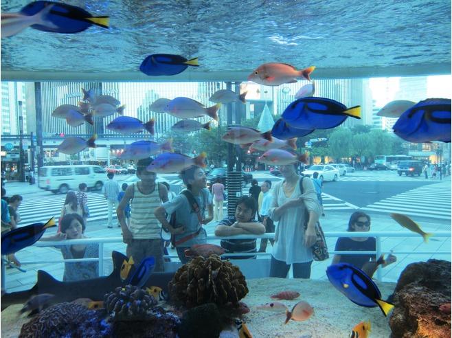 พิพิธภัณฑ์สัตว์น้ำ