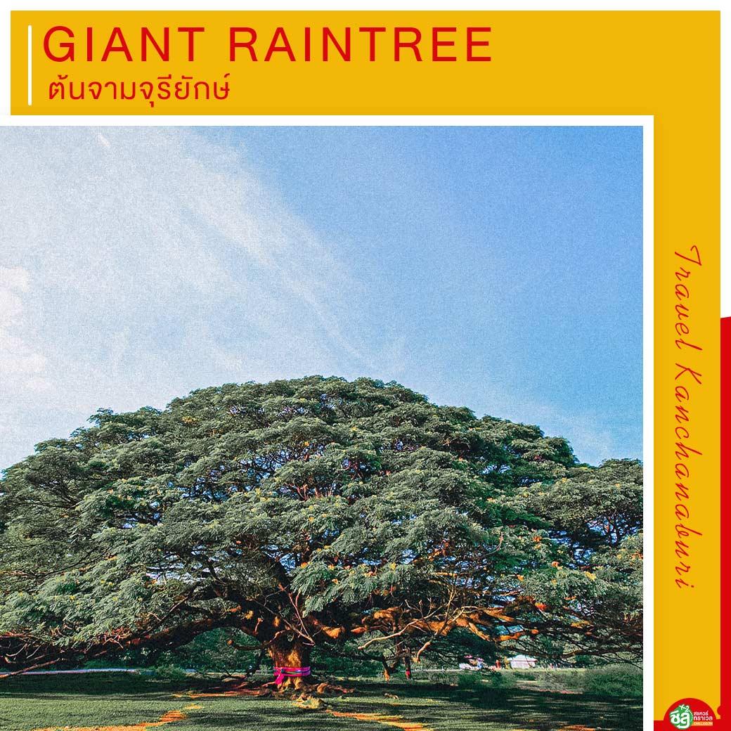 ต้นจามจุรียักษ์